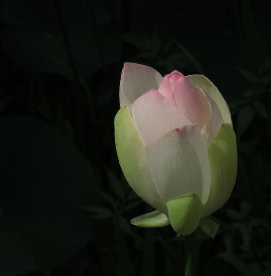 Img_4636